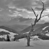 зима взгляда Стоковое фото RF