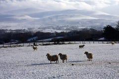 зима взгляда snowdonia Стоковые Изображения RF
