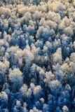 зима взгляда сверху пущи Стоковые Изображения