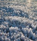 зима взгляда сверху пущи Стоковая Фотография RF