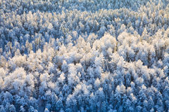 зима взгляда сверху пущи Стоковые Изображения RF
