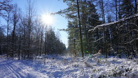 зима взгляда Украины солнца горы moloda Стоковая Фотография RF