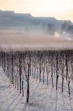 зима виноградника ландшафта Стоковое Изображение
