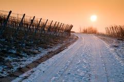 зима виноградника лоз восхода солнца Стоковая Фотография RF