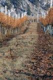 зима виноградника места Стоковые Изображения RF