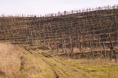 зима виноградника Стоковое Изображение RF
