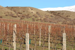 зима виноградника Стоковое фото RF