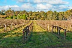 зима виноградника Стоковые Фотографии RF