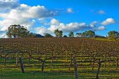 зима виноградника Стоковое Фото