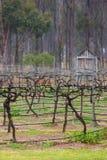 зима виноградника Стоковая Фотография RF