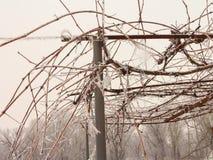 Зима виноградин Лоза холод витикультура стоковые изображения