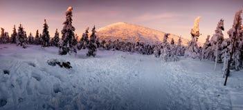 зима восхода солнца Стоковая Фотография