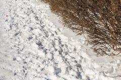 зима времени снежка следов ноги зима валов снежка неба лож заморозка мрачного дня ветвей сини Ветви Буша Стоковые Изображения