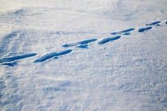 зима времени снежка следов ноги Стоковые Фотографии RF