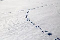 зима времени снежка следов ноги Стоковое Фото