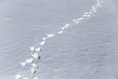 зима времени снежка следов ноги Стоковое Изображение RF