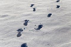 зима времени снежка следов ноги Стоковые Изображения