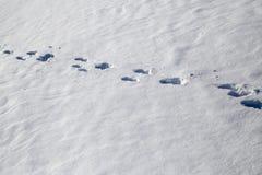 зима времени снежка следов ноги Стоковая Фотография