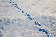 зима времени снежка следов ноги Стоковые Фото