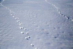 зима времени снежка следов ноги Стоковые Изображения RF