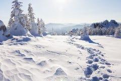 зима времени снежка следов ноги зима температуры России ландшафта 33c января ural Ural, Zyuratkul Стоковое Изображение RF