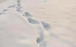 зима времени снежка следов ноги стоковое фото rf