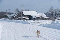 зима времени снежка цветка Изображение бегов собаки через деревню Стоковые Фото