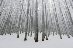 зима времени снежка цветка Стоковое фото RF