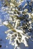 зима времени снежка цветка Стоковая Фотография