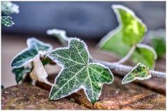 зима времени снежка цветка стоковые изображения