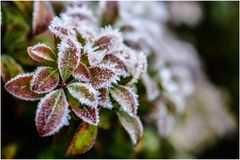 зима времени снежка цветка стоковое изображение rf