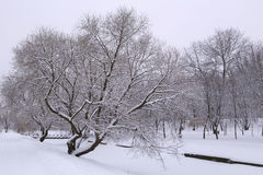 Зима все в белизне Стоковые Изображения RF