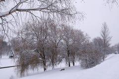Зима вся белизна Стоковые Изображения RF