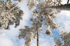 зима высокорослых валов Стоковое Фото