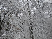 зима вьюги Стоковое Изображение RF