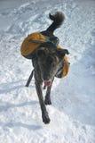 Зима в белых горах в Нью-Гэмпшир Стоковые Фотографии RF
