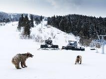 Зима в больших горах Кавказа Стоковое Изображение RF