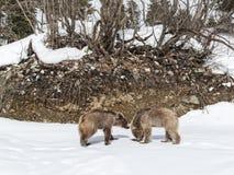 Зима в больших горах Кавказа Стоковые Изображения RF