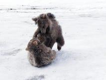 Зима в больших горах Кавказа Стоковое Фото