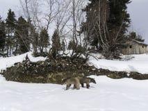 Зима в больших горах Кавказа Стоковое фото RF