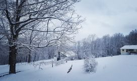 Зима в Вирджинии Стоковая Фотография RF