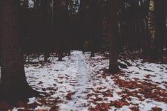Зима в Висконсине Стоковые Фотографии RF