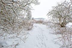 Зима в европейском лесе Стоковые Изображения