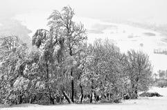 Зима в лесе горы в черно-белом Стоковое Фото