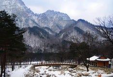 Зима в Корее Стоковая Фотография