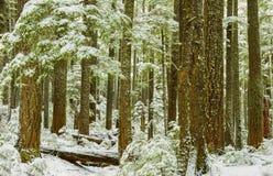 Зима в национальном парке Mt более ненастном Стоковые Изображения RF