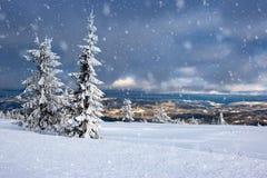 Зима в Норвегии - Lifjell Telemark Стоковые Изображения RF