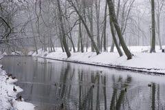 Зима в парке 11 Стоковое Изображение RF