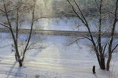 Зима в парке стоковые изображения