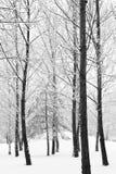 Зима в парке Стоковое Изображение RF